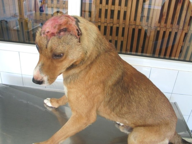 hund pankreatitis naturheilmittel